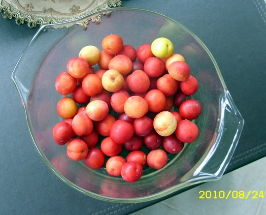 Wild Plums for  Shirleys Plum Cake