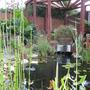 pond and pergola
