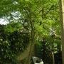 FAVOURITE TREE OF MINE