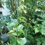 pots of plants in limbo!