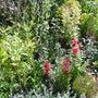 back garden 3.9.10