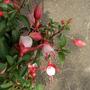 Sm_garden_fuschia_08may22_02