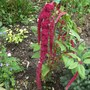 Love_lies_bleeding