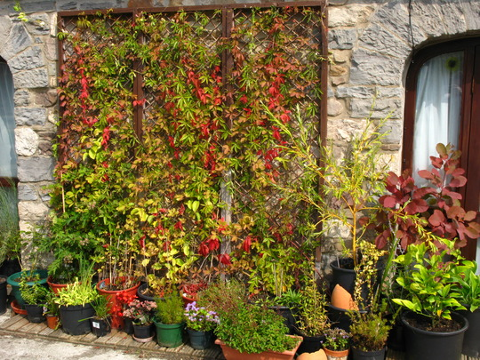 The end of the season for the big trellis