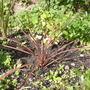 September_garden_2010_034