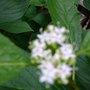 PRETTY TINY FLOWERS