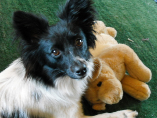 """Frances with one of her favourite toys - """"Sandy"""""""