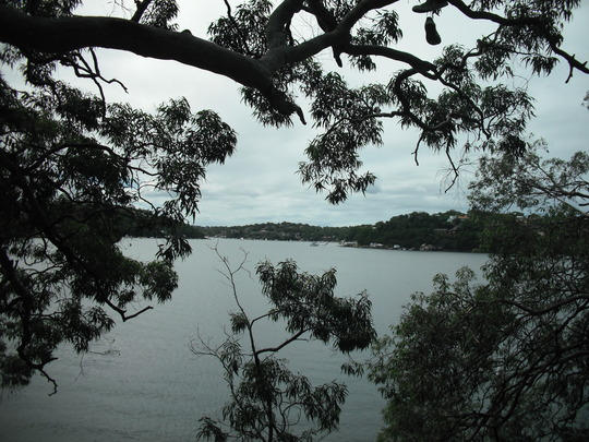 Port Hacking river through trees