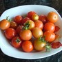 3rd crop of toms