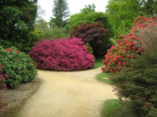 Rhododendron Sheffield Park Gardens