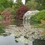 Reflections, Sheffield Park Gardens