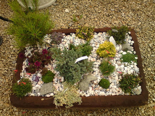 Small rockery grows on you for Rockery designs for small gardens
