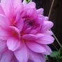 Pretty_flowers_1_