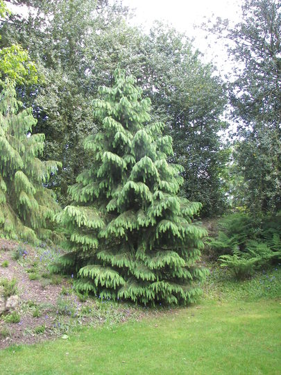 Biddulph Grange Gardens.12