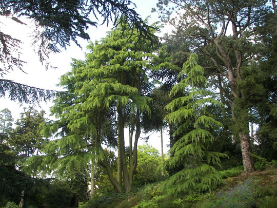 Biddulph Grange Gardens.13