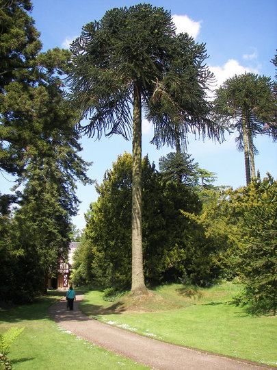 Biddulph Grange Gardens.14