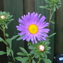 Flowers_004