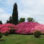 Leonardslee Gardens1