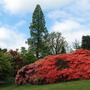 Leonardslee Gardens2