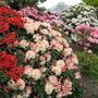 Leonardslee Gardens5