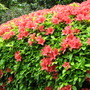 Leonardslee Gardens7