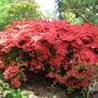 Leonardslee Gardens20