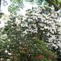 Leonardslee Gardens21