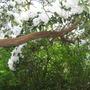Leonardslee Gardens23