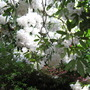 Leonardslee Gardens24
