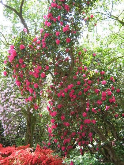 Leonardslee Gardens27