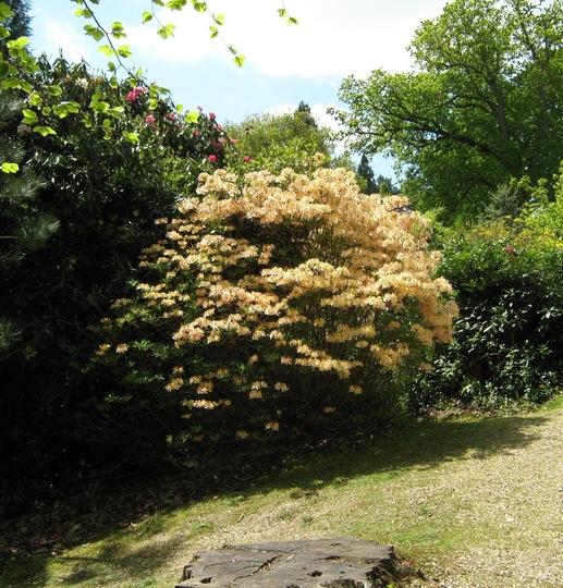 Leonardslee Gardens31