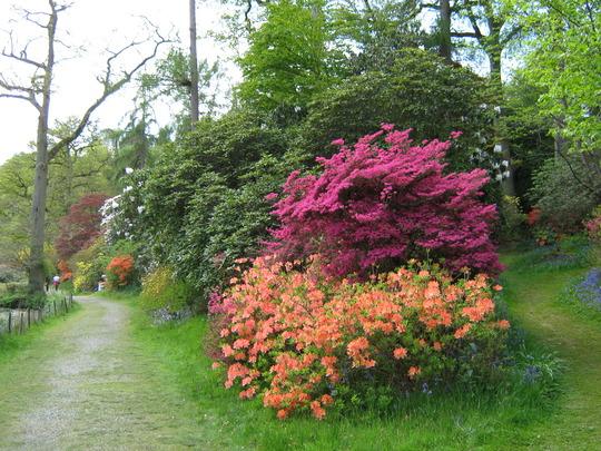 Leonardslee Gardens34