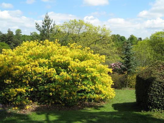 Leonardslee Gardens42