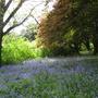 Leonardslee Gardens43