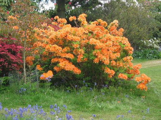 Leonardslee Gardens45