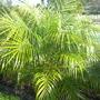 Palms_004
