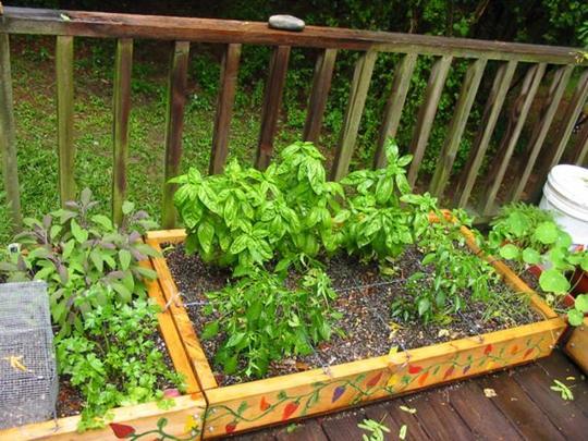 patio garden2