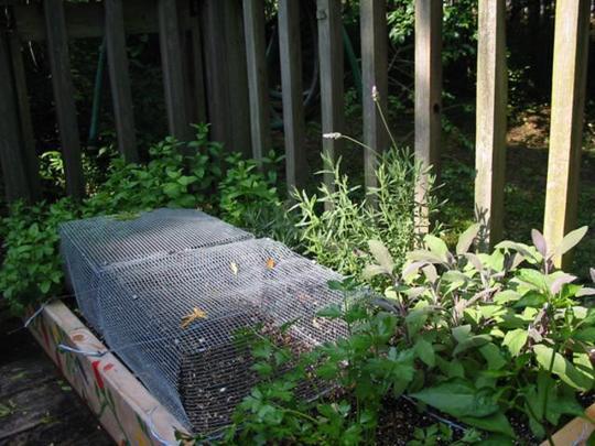 patio garden3