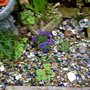 MARBLES IN MY SMALL ROCKERY