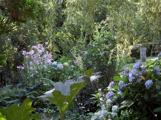 Bog garden area