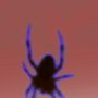 ENHANCED PHOTO OF SPIDER