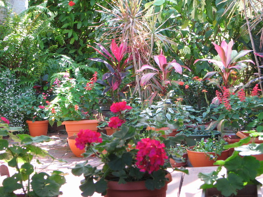 Early Spring in north-east Downunder: closer view of Courtyard garden plants