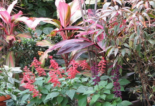 Early Spring in north-east Downunder: lots of colour in the Courtyard Garden