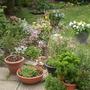 Kitchen_patio_flower_bed