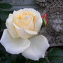 Rose Denman