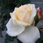 Rose Denman 2