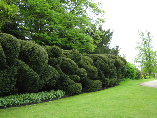 The Hedge, Hinton Ampner