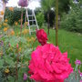2008_May_flowers_and_claud_004.jpg