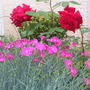 2008_May_flowers_and_claud_010.jpg
