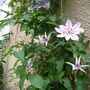 2008_May_flowers_and_claud_008.jpg